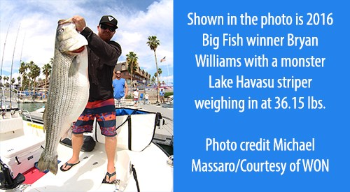 Lake Havasu's WON Striper Derby 36th Yearly Event