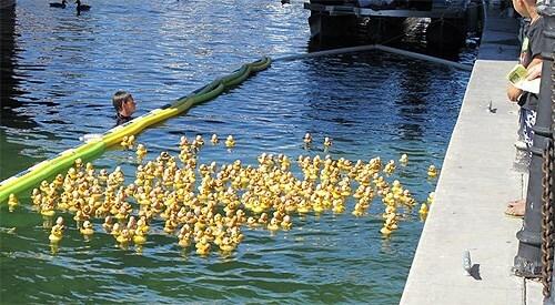 Lake Havasu City Duck Derby Race